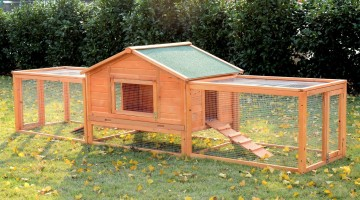 How to Choose The Right Chicken Coop